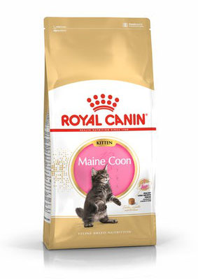 ROYAL CANIN KITTEN MAINE COON - SERVICE CANIN ROYAL CANIN NICE ALIMENT CROQUETTE POUR CHATON MAINE COON