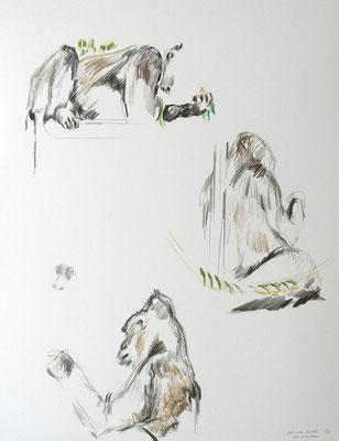 Gorilla (f)