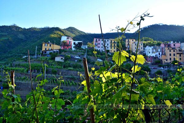 Corniglia - Cinque Terre - Italie -