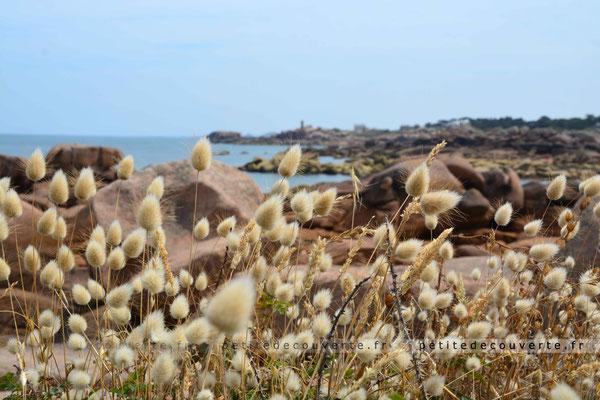 île Renote  Côte de Granit Rose  Trégastel Bretagne