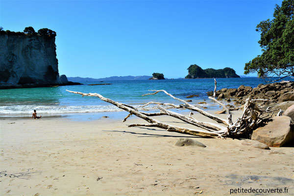 Stingray Bay - Cathedral Cove - Nouvelle-Zélande