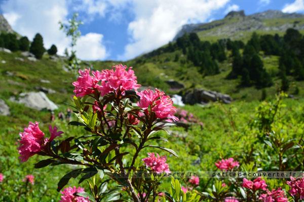L'Orgère Savoie Vanoise