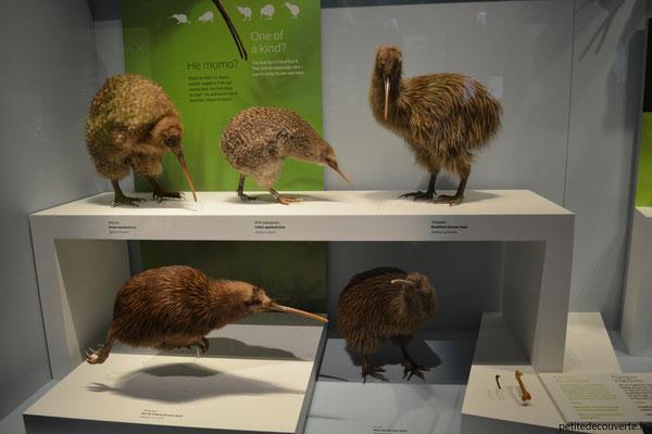 Musée Te Papa Wellington