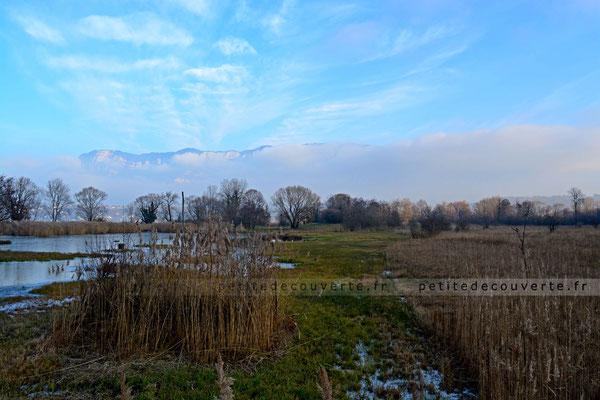 Etang des Aigrettes - Observatoire des Aigrettes - Lac du Bourget - Savoie