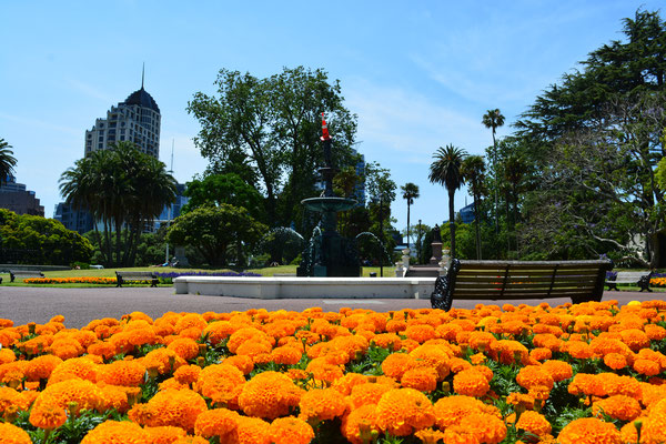 Albert Park Auckland