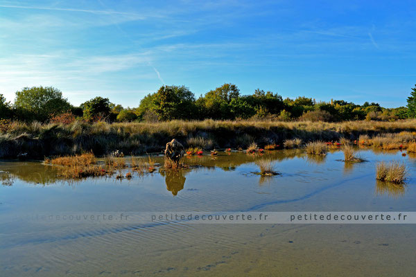 Réserve Naturelle des marais de Séné Morbihan Bretagne