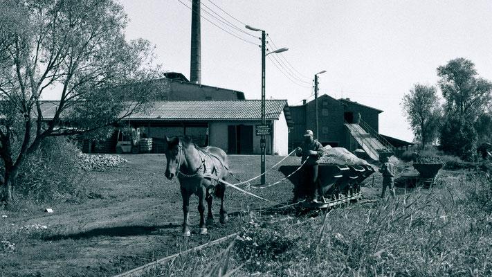 2000 // Pferdebahn Iwno // Anspannen