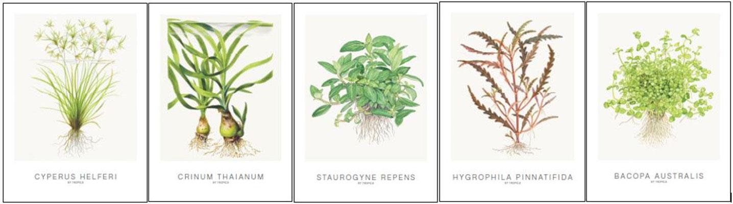 Tropica Kunstkarten Cyperus