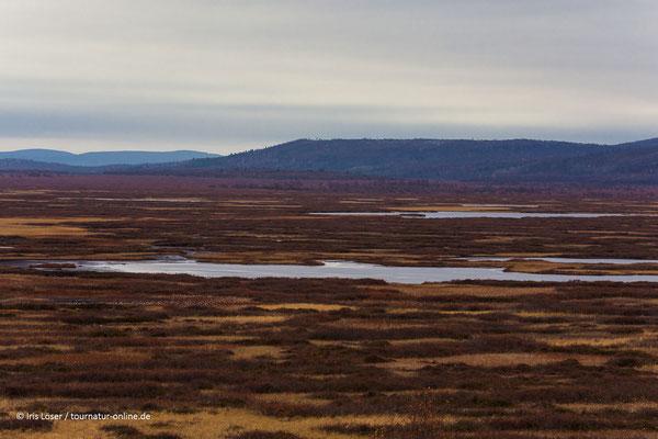Lappland ist karg und wunderschön.