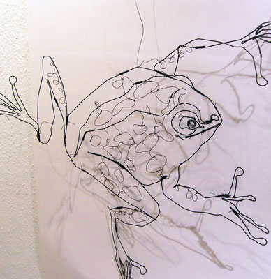 grenouille 62/62 cm