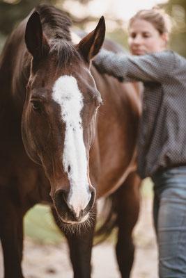 Manuelle Lymphdrainage am Tier, Pferd, Tier, Stall, Sebastian Frank Fotografie