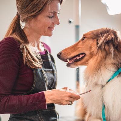 Hund, Hundesalon, Tierpflege, Hundefrisör, Sebastian Frank Fotografie