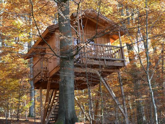 Baumhaus Refugium, Herbst. Bild: Baumhaushotel Solling.