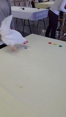 """Später liegt das lila Target direkt in einer Reihe mit den anderen Targets. Für das bronzene Ei müssen alle Targets als Reihe, Kette und Viereck auf den Tisch gelegt werden, wobei das lila Target in jeder """"Formation"""" jede Position einnehmen muss."""