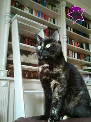 Suchbild: Wer findet die zweite Katze Emmi?!
