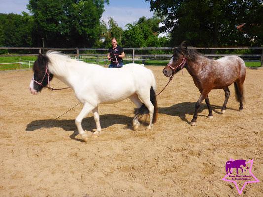 Jetzt läuft Lilly-Lou vorne - für Rony-Pony eine schwierige Übung