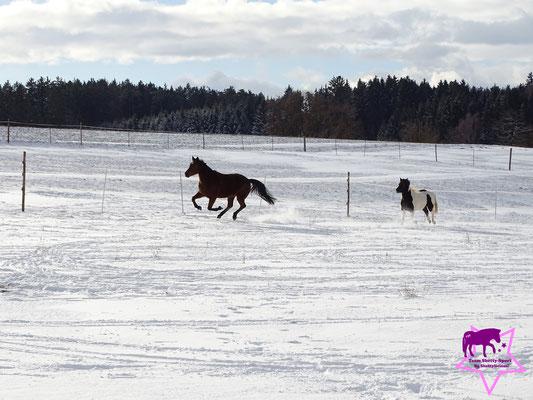 Die Ponys fetzen im Schnee...