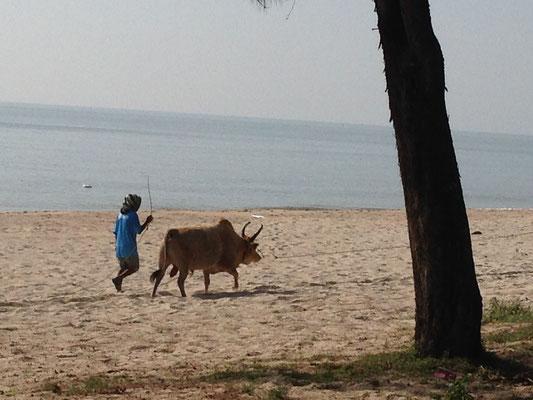 ...interessanter Besucher am Strand