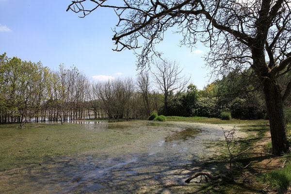 Nationaal Park De Biesbosch - Pays Bas - Juin 2011