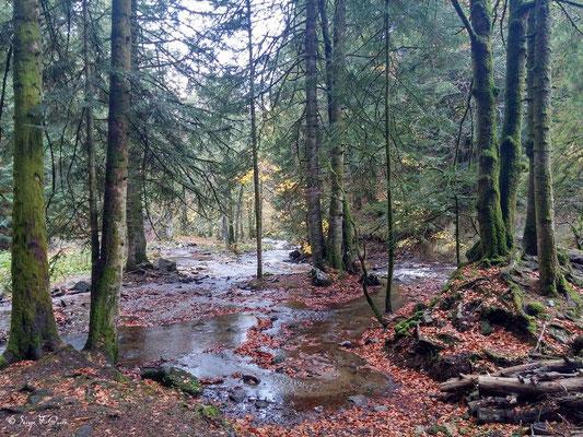 Au pied de la cascade du Rossignolet - Le Mont Dore - Auvergne - France