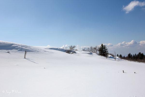 Les plaines brûlées - Chastreix Sancy - Auvergne - France