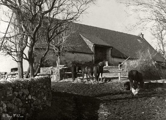 Ferme aux chevaux à St Sauves d'Auvergne (1980) Auvergne - France