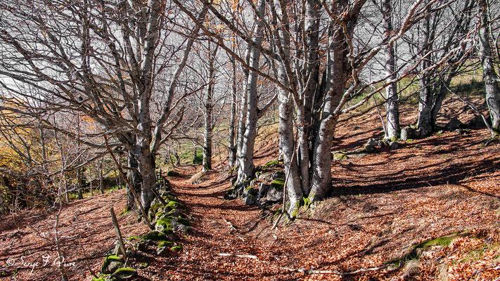 Chemin d'automne entre l'Usclade et chez Tamboine  - Massif du Sancy - Auvergne - France