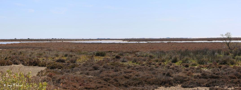 La Réserve Naturelle Nationale de Camargue - Les Saintes Maries de la Mer - Camargue - Bouches du Rhône - France