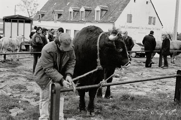 """""""Les vaches et l'homme"""" - Foire de La Tour d'Auvergne (1978) - Massif du Sancy - Puy de Dôme - Auvergne - France"""