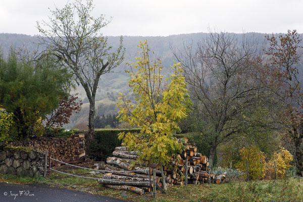 Paysage d'automne à Murat le Quaire - Massif du Sancy - Auvergne - France