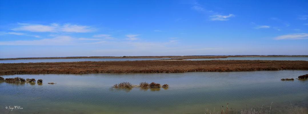 Paysage Camarguais - Réserve Naturelle Nationale de Camargue - France