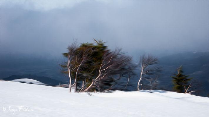 Le petit arbre au milieu de la tourmente - Façon peinture - Massif du Sancy sous la neige - Auvergne - France