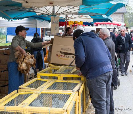 Foire de Giat (les volailles) - Auvergne - France (2017)