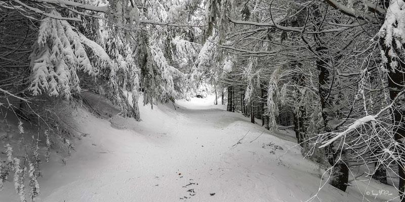 Chemin de randonnée enneigé - Murat le Quaire - Massif du Sancy - Auvergne - France