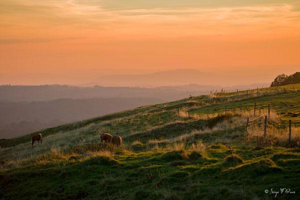 Soleil rasant dans le massif du Sancy, près de la Stelle - Auvergne - France