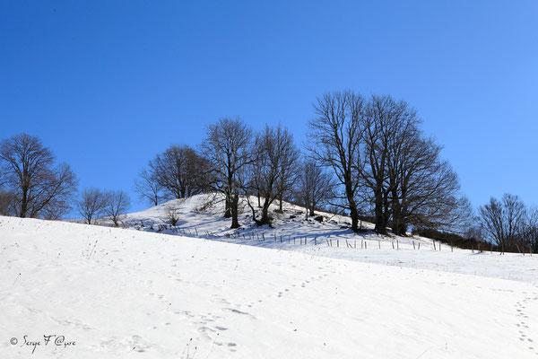 En allant sur le Paillou - Massif du Sancy - Auvergne - France