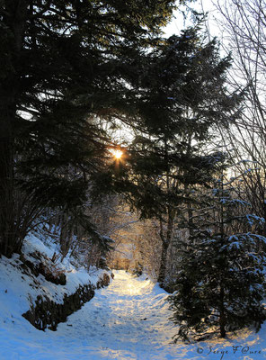 Chemin enneigé à Murat le Quaire - Massif du Sancy - Auvergne - France