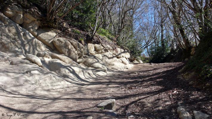 Le chemin des Grailleux au Pessy - Murat le Quaire - Massif du Sancy - Auvergne - France