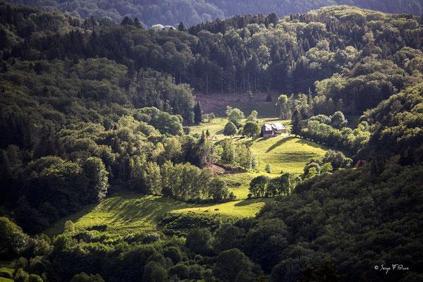 Paysage entre Châteauneuf et Liournat - Vu de Murat le Quaire - Le Massif du Sancy - Auvergne - France