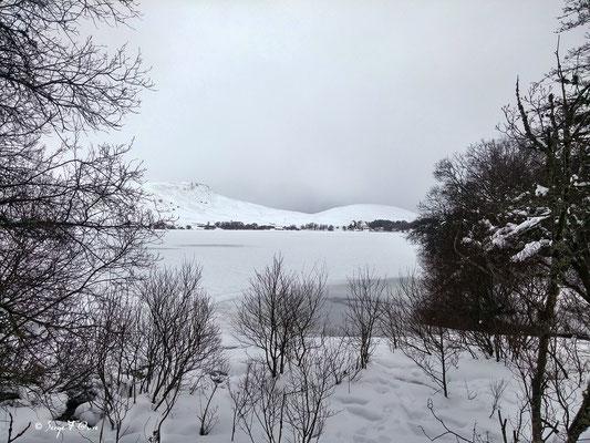 Le lac gelé du Guery - Massif du Sancy - Auvergne - France