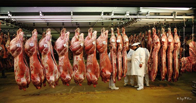 Les halles de Rungis - Les viandes de boucherie - France (Octobre 2012)