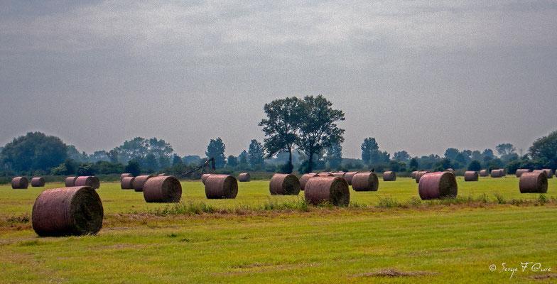 Les foins en baie de Somme - Picardie - France