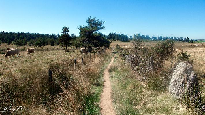 En allant vers Roc des Loups - France - Sur le chemin de St Jacques de Compostelle (santiago de compostela) - Le Chemin du Puy ou Via Podiensis (variante par Rocamadour)