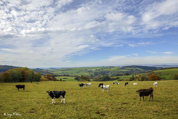 Scène pastorale - Massif du Sancy - Auvergne - France