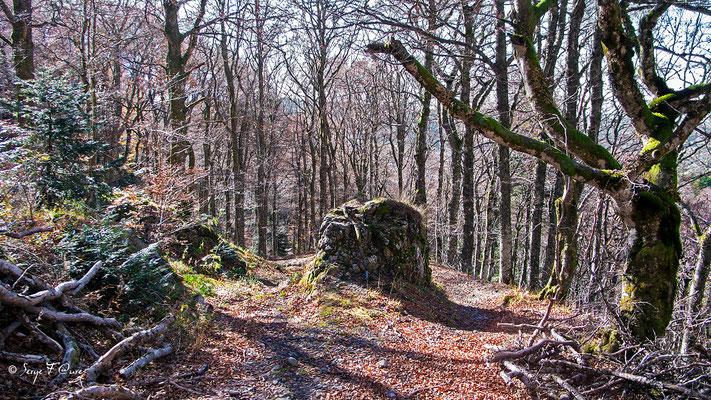 Chemin d'automne entre l'Usclade et le Puy Gros  - Massif du Sancy - Auvergne - France