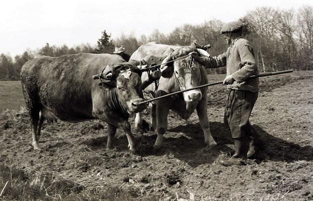 Paysans au champ (Auvergne) 1979