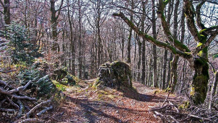 Chemin en direction de l'Usclade -  Murat le Quaire - Auvergne - France