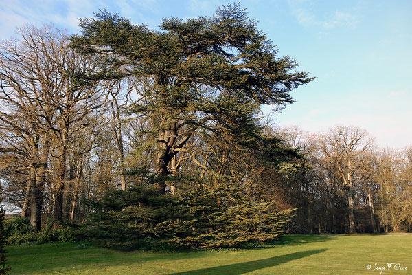 Parc du château de Breteuil - Choisel - Yvelines - Île de France