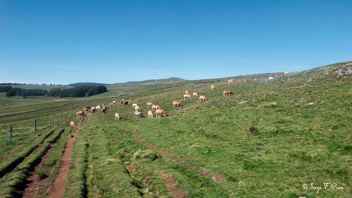 Le plateau de l'Aubrac - En allant vers Aubrac - France - Sur le chemin de St Jacques de Compostelle (santiago de compostela) - Le Chemin du Puy ou Via Podiensis (variante par Rocamadour)