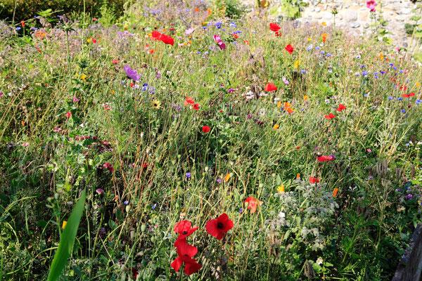 """""""Herbarium"""" Jardin botanique - Saint Valéry sur Somme - Baie de Somme - Picardie - France (juillet 2011)"""